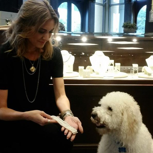 Just spotted at our Summit store: Louis, our fave labradoodle, shopping for Mikimoto pearls! #Mikimoto #doggonecute  #dogsofbham #dogsofinsta #pearls #shopping #happysaturday #brombergsjewelry @official_mikimoto